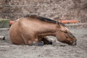 Different types of Colic In Horses and their Causes