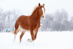 Horse Color Genetics: Understanding Coat Colors