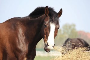 How Much Does a Horse Cost: Monthly Costs of Owning One