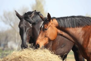Colic In Horses Treatments