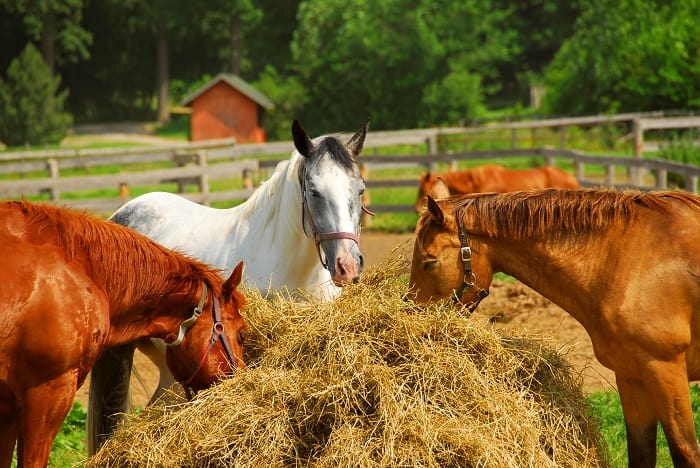 Is Beet Pulp Safe for My Horse?