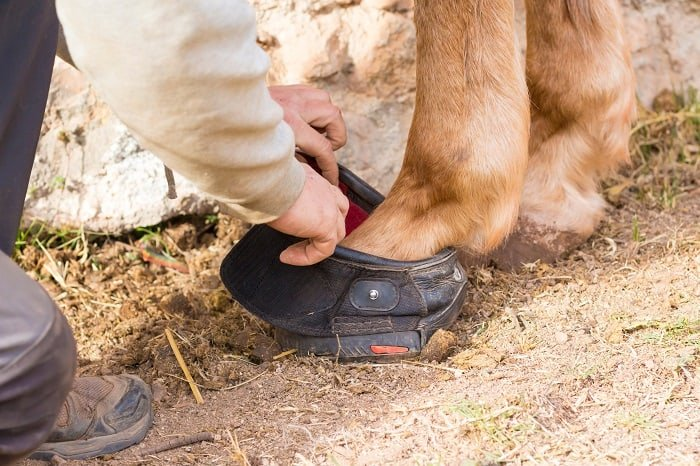 How to Choose Soaking Boots for Horses, What You Have to Consider