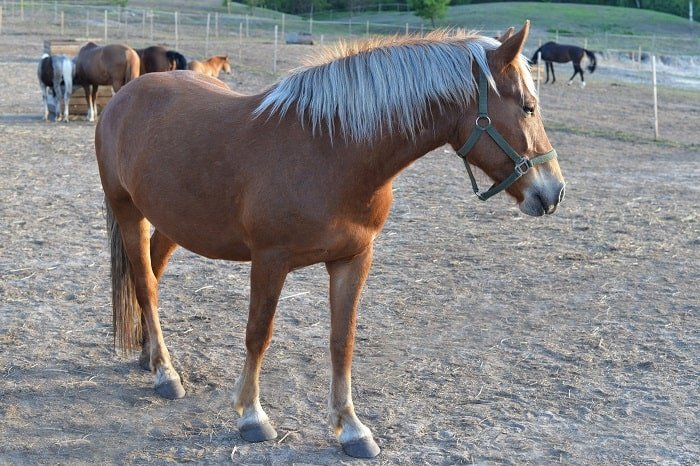 Different Horse Types: Characteristics and Heights
