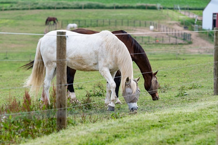 Best Electric Fence For Horses: A Note About Electrical Fencing
