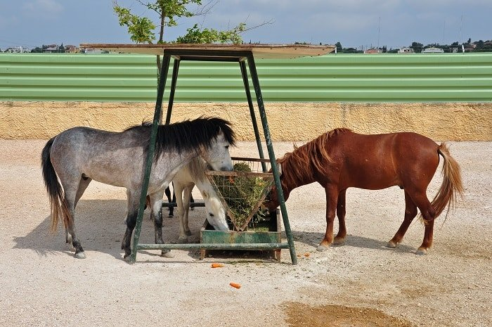 Slow Feeders for Horses - Prerequisites to Using a Slow Feeder