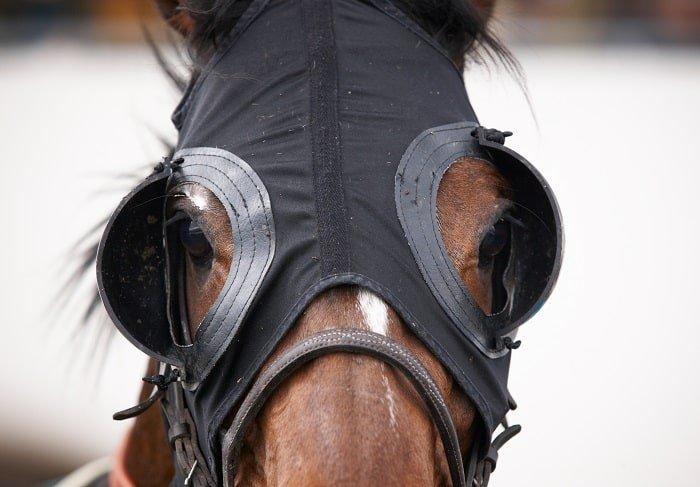 Horse Blinkers or Horse Blinders
