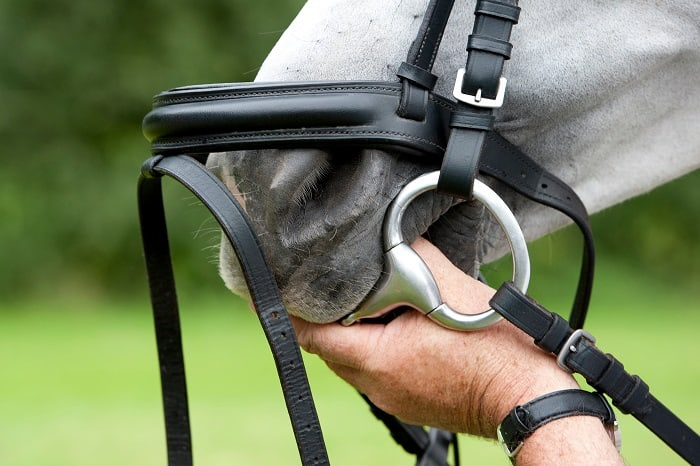 Why Are There So Many Options about Horse Bit Guide?