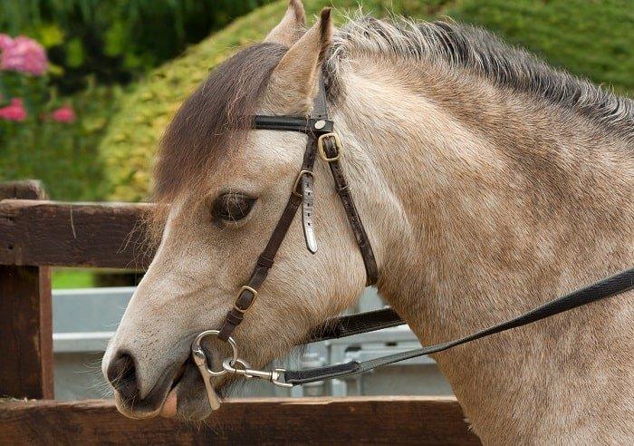 Horse Bit Guide: Gag Bits