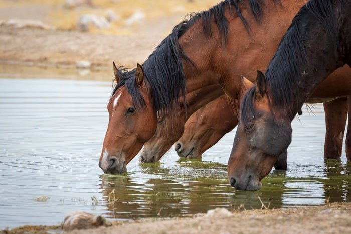 EPM in Horses: What is EPM?