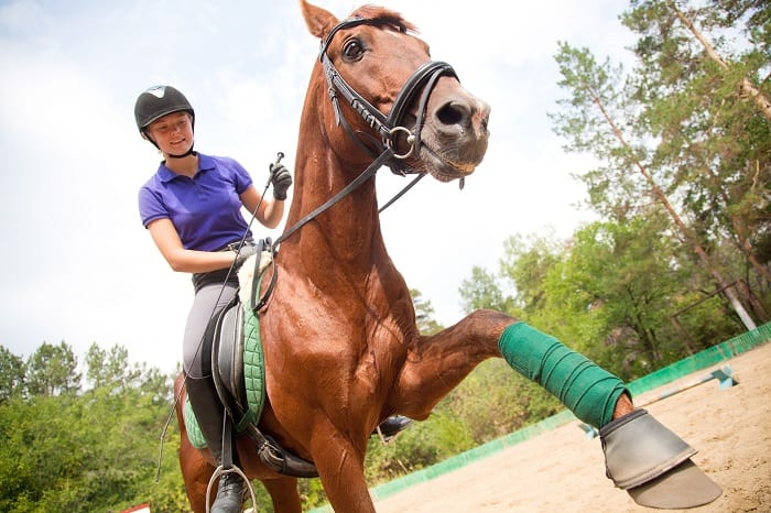 When is the Best Time to Train a Horse: Saddling (2-4 years)