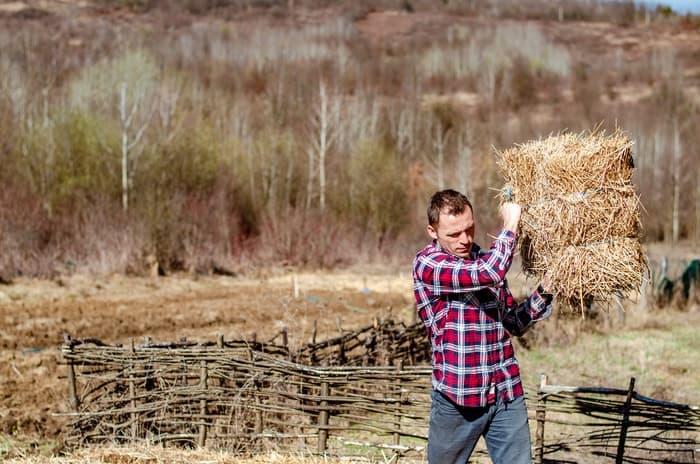chopped hay for senior horses Hay Pellets